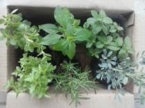 """Curso """"Hortas Medicinais em Pequenos Espaços: Cultivo e Uso"""""""